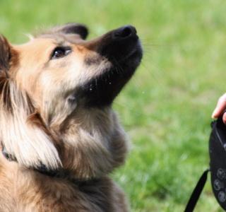 Indywidualne szkolenia psów
